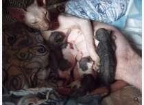 Прийму в дар кота или кошку сфинкса, в Ейске