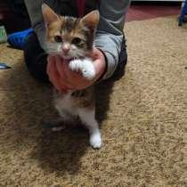 Отдам котенка бесплатно, в г.Бердянск