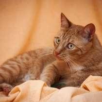 Рыжий котик Джон ищет родителей! В добрые руки!, в Москве