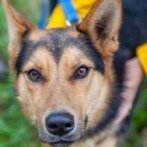Айрис - молодая, красивая и добрая собака в дар, в Москве