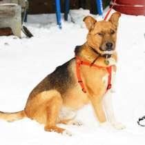 Особенный пес Урчик ищет дом, в Москве