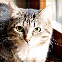 Муся. Милая приятная молодая кошечка в добрые руки, в Москве