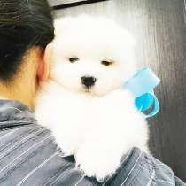 Замечательные белоснежные собачки, в Казани