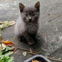 Котёнок - ласковый, добрый, 2,5 месяца, игривый, здоровый, в Апрелевке