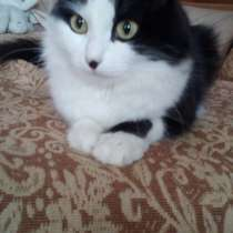 Кошке нужен дом4, в Красноярске