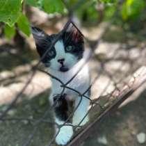 Котенок в добрые руки!! Котик ищет дом до холодов!, в г.Харьков