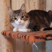 Скромная и загадочная кошка Апрелька в добрые руки, в Москве