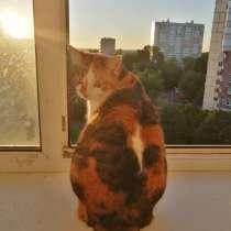 Пропала трехцветная кошечка в снт Турейка, в Наро-Фоминске