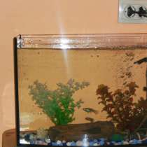 Аквариум с рыбками, в Асбесте