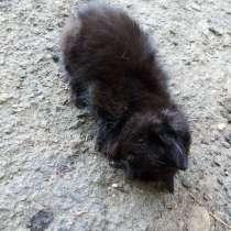 Котенок с свернутой шеей помогите котёнку бесплатно отдадим, в г.Кривой Рог
