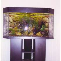 Обслуживание аквариумов, в Симферополе