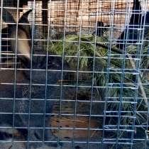 Кролик великан разных возрастов, в Волгодонске