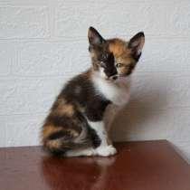 Симпатичный котёнок-девочка, в Армавире