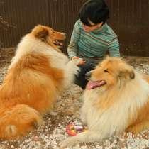 Передержка собак, в Рязани