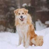 Шикарный пёс Нортон в добрые руки, в Москве