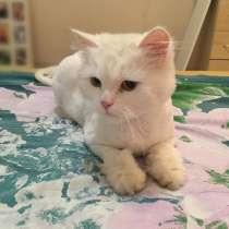 Кошка, в Пскове