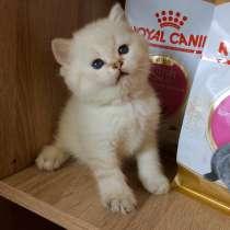 Кошечка Эльза, в Самаре