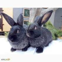 Кролики, в Солнечногорске
