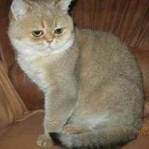 Продам котика, в г.Донецк
