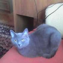Кошечка Бася, в Старом Осколе