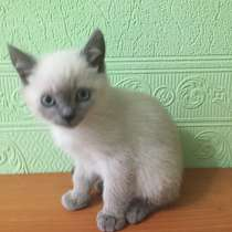 Продам котят, в Салехарде
