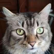 Пропал кот, в г.Шумилино