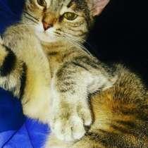 Кошка, в Нижнем Новгороде