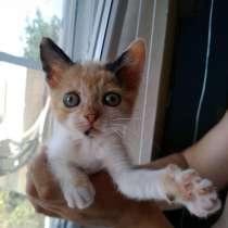 Отдам котенка (трехцветная кошка), в Таганроге