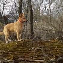 Алиса - ласковая домашняя собака в поисках дома!, в Москве