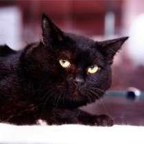 Арап - милый, нежный и застенчивый котик, в Москве