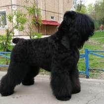 Русский черный терьер щенки, в Москве