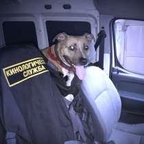 Профессиональная дрессировка собак, в Видном