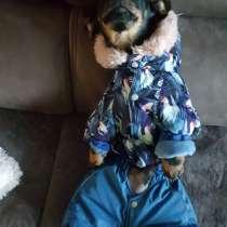 Одежда для собак, в Новосибирске