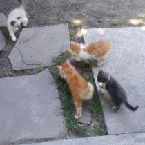 Подарю котят. Котята милые, добрые и ласковые ищут дом, в г.Алматы