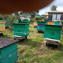 Продаю пчёл средне русские скрещенве с корпаткоми, в Можайске
