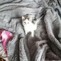 Котёнок, в Челябинске