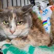 Трехцветная кошка Лара ищет дом, в Москве
