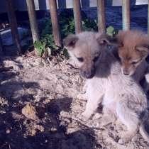 Милые щеночки очень хотят обрести свой дом, в Волгограде