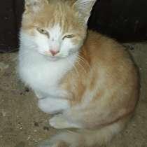 Очаровательный котенок ищет дом, в Саках