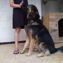 Отдадим собаку в хорошие руки!!!, в г.Нетания