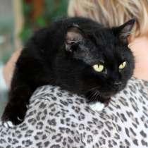 Отважный смельчак кот Гангстер ищет дом, в Москве