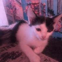 Котята в добрые и любящие руки, в Стерлитамаке