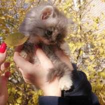 Кошки бесплатно в хорошие руки, в Липецке