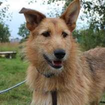 Добрый, дружелюбный пёс Рикки, в Москве