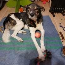 Брошенный пес ищет дом, в Петрозаводске
