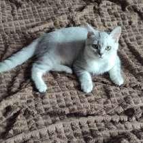 Котята, в Орле