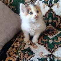 Кошечка, в г.Пинск