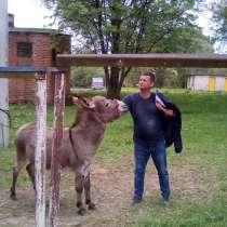 Дмитрий, 46 лет, хочет познакомиться – Свободен, мне это надоело, в Обнинске