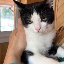 Феликс - вальяжный и ласковый кот котенок в добрые руки бесп, в Москве