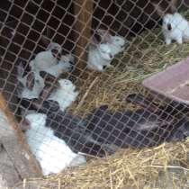 Продаются кролики, в Рубцовске